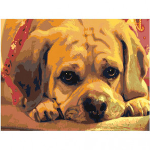 Грустный щенок Раскраска картина по номерам на холсте