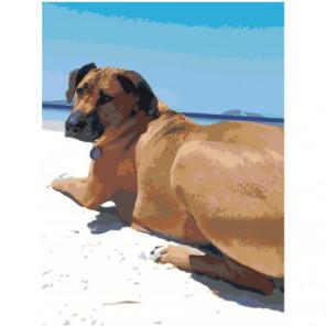 Собака на пляже 75х100 Раскраска картина по номерам на холсте