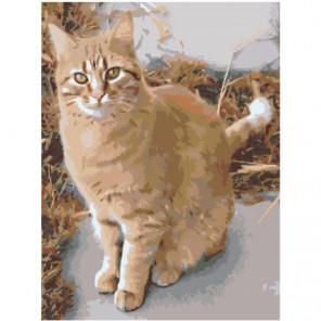 Рыжая кошка 60х80 Раскраска картина по номерам на холсте