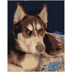 Серьезный пес хаски 100х125 Раскраска картина по номерам на холсте