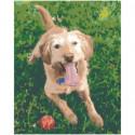 Пёс с мячиком Раскраска картина по номерам на холсте