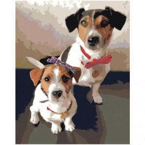 Две собаки джек рассел Раскраска картина по номерам на холсте