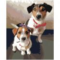 Две собаки джек рассел 80х100 Раскраска картина по номерам на холсте