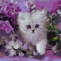Котенок в сиреневых тонах Раскраска картина по номерам на холсте KH0712