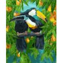 Туканы Раскраска картина по номерам на холсте МСА496