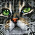 Зеленоглазый кот Алмазная вышивка мозаика на подрамнике UС196