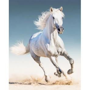 Фото холста Белая лошадь Алмазная мозаика на подрамнике LG192