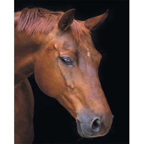 Фото холста Лошадь в тишине Алмазная мозаика на подрамнике LG199