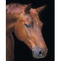 Лошадь в тишине Алмазная мозаика на подрамнике LG199