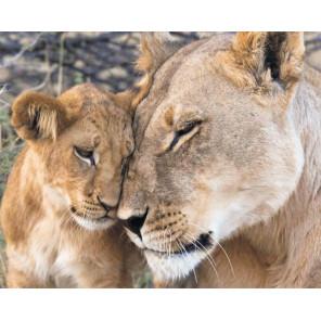 Фото холста Любовь львицы Алмазная мозаика на подрамнике LG197