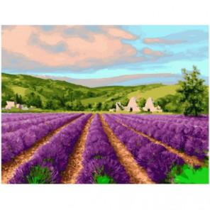Поле цветущей лаванды Раскраска картина по номерам на холсте