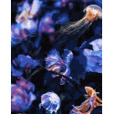 Светящееся море Раскраска картина по номерам на холсте ZX 23868