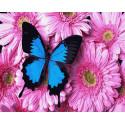 Бабочка на розовом букете Раскраска картина по номерам на холсте ZX 23762