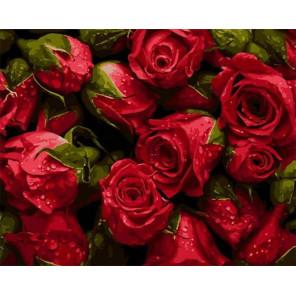 Освежающие капли на розах Раскраска картина по номерам на холсте PK68002