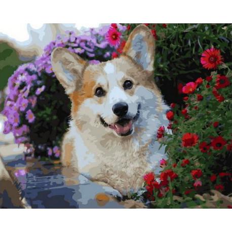 GX36083 Корги в цветочной клумбе Раскраска картина по ...