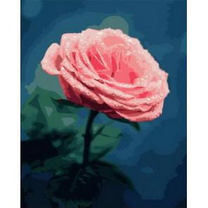 Нежный розовый бутон Раскраска картина по номерам на холсте PK68032