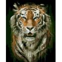 Гневный взгляд Раскраска картина по номерам на холсте PK68097