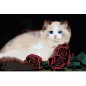 Пример в интерьере Персидская кошка с розами Раскраска картина по номерам на холсте AAAA-RS018