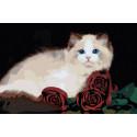 Персидская кошка с розами Раскраска картина по номерам на холсте AAAA-RS018