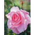 Цветок розы Алмазная частичная вышивка (мозаика) Molly KM0730