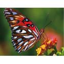 Яркая бабочка Алмазная частичная вышивка (мозаика) Molly KM0890