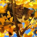 Кот на дереве Алмазная мозаика вышивка на подрамнике Molly KM0675