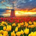 Поля тюльпанов в Нидерландах Алмазная мозаика вышивка на подрамнике Molly KM0685