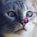 Кот с бабочкой Алмазная мозаика вышивка на подрамнике Molly KM0691