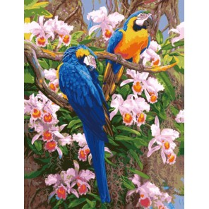 Цветные попугаи 50х65см Раскраска по номерам акриловыми красками на холсте Menglei