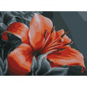Оранжевая лилия Картина по номерам с цветной схемой на холсте KK0669