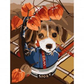 Озорной щенок Раскраска по номерам на холсте Molly KH0795