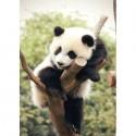 Уставшая панда Алмазная вышивка (мозаика) Гранни