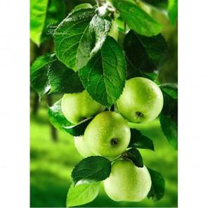 Зеленые яблоки Алмазная вышивка (мозаика) Гранни