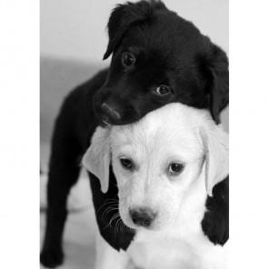 Черный и белый щенок Алмазная вышивка (мозаика) Гранни