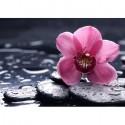 Орхидея Ванда Алмазная вышивка (мозаика) Гранни