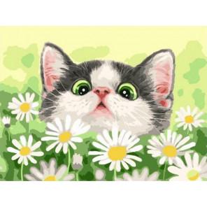 Котёнок в ромашках Раскраска картина по номерам на холсте PKC62002