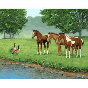 Лошади на водопое встретили уток Раскраска картина по номерам на холсте GX34894