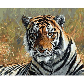 Тигр в Саванне Раскраска картина по номерам на холсте GX31739
