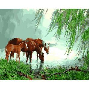 Кони на водопое Раскраска картина по номерам на холсте GX31668