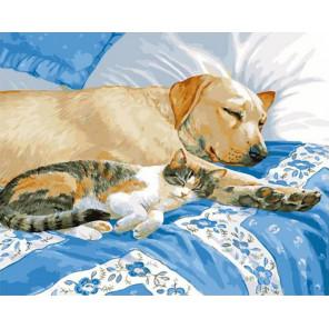 Тихий час. Кошка с собакой спят Раскраска картина по номерам на холсте GX30696
