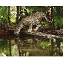Жажда леопарда Раскраска картина по номерам на холсте GX35038