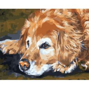 Грустный пёс Раскраска картина по номерам на холсте PK59097