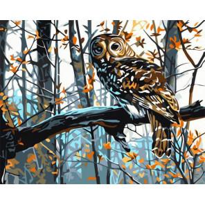 Сова Раскраска картина по номерам на холсте MG2022