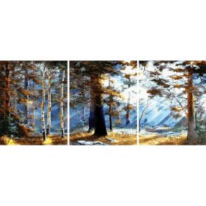 Первые лучи солнца в лесу Триптих Раскраска картина по номерам на холсте РХ5305