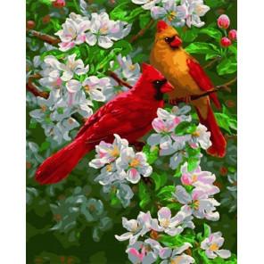 Яркие птички на яблоне Раскраска картина по номерам на холсте МСА443