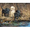 Охотники за черепахами Раскраска картина по номерам Plaid