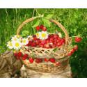 Вкусный урожай. Клубника Раскраска картина по номерам на холсте PK85008