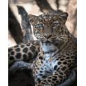 Портрет леопарда Раскраска картина по номерам на холсте ZX 23392