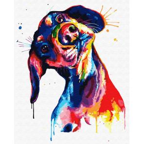 Цветная такса Раскраска картина по номерам на холсте ZX 23330