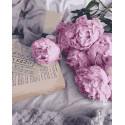 Романтичные пионы Раскраска картина по номерам на холсте ZX 23275